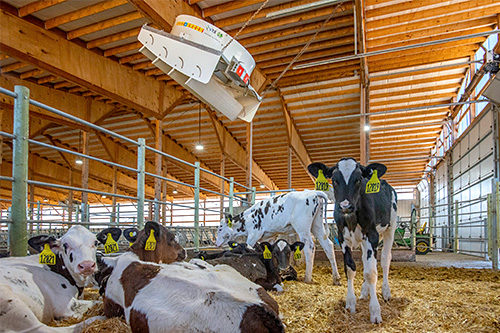 Dairy technology in cow barn