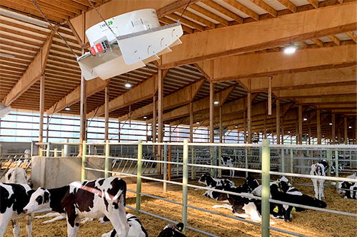 industrial ceiling fan keeping cows cool and healthy